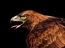 Free Beak, Eagle, Bird Of Prey, Bird Royalty Free Stock Image - 107965486