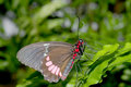 Free Brown, Red & Pink Butterfly Stock Image - 1088811