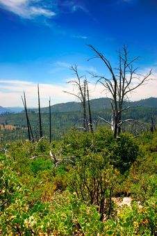 Free Trees Stock Photo - 1081700