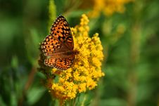 Free Butterfly On Wildflower Royalty Free Stock Photos - 1082868