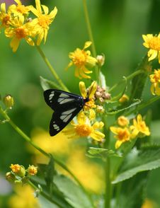 Free Butterfly On Wildflower 7 Stock Photos - 1083353