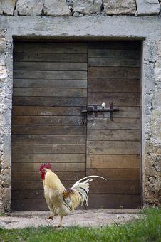 Free Cock In Fron Of The Door Stock Photo - 1084530