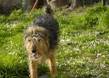 Dog 1 Stock Images