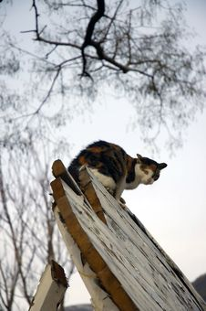 Cat On The Top Stock Image