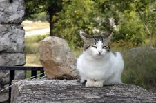 Free Cat On The Rock Royalty Free Stock Photos - 1084838