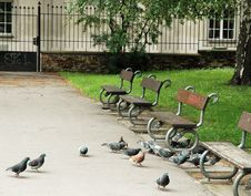Pigeons In City Park Stock Photos