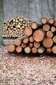 Free Wood In The Forest Stock Photo - 1086500