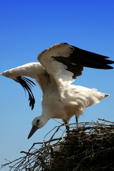 Free Stork Stock Photo - 1086540