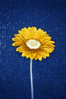 Free Sunflower 2 Royalty Free Stock Image - 1087346