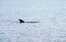 Free Dolphin Stock Images - 1088414