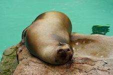 Free Seal At The Zoo Stock Image - 1088801
