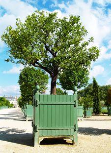 Free Tree Stock Photography - 1088802
