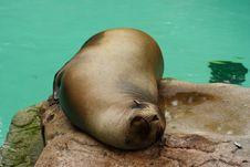 Free Seal At The Zoo Royalty Free Stock Photos - 1088808