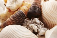 Free Shells Stock Photography - 1088842
