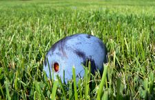 Free Plum In The Grass Royalty Free Stock Image - 1089106