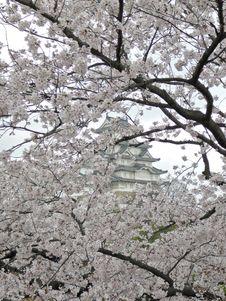 Free Sakura (cherry Blossoms) In The Background Himeji Castle Stock Photos - 1089413