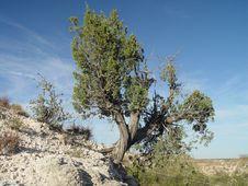 Free Tree On Mountain Side Royalty Free Stock Photos - 1089588