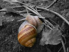 Free Conchology, Snail, Cockle, Snails And Slugs Stock Photo - 108043370