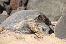 Free Turtle, Reptile, Tortoise, Terrestrial Animal Royalty Free Stock Photography - 108043447