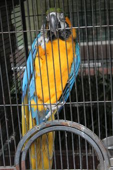 Free Bird, Macaw, Yellow, Parrot Stock Photos - 108043673