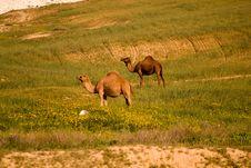 Free Ecosystem, Grassland, Pasture, Fauna Stock Photos - 108052743