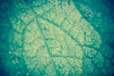 Free Cucumber Leaf In Water Drops Retro Royalty Free Stock Images - 108081479