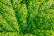 Free Cucumber Leaf In Water Drops Royalty Free Stock Image - 108081736