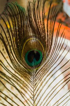 Peacock Feather Macro Stock Images