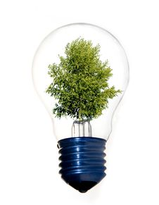 Free Tree In Light Bulb Royalty Free Stock Image - 10823516