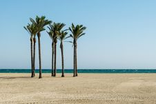 Free Palm Tree, Arecales, Sea, Tree Stock Photography - 108243982