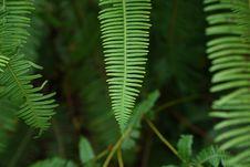 Free Vegetation, Leaf, Plant, Fern Royalty Free Stock Photo - 108244205