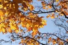 Free Branch, Tree, Autumn, Yellow Stock Image - 108244371