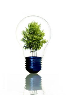 Free Tree In Light Bulb Stock Photo - 10833030