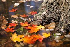Free Leaf, Autumn, Maple Leaf, Flora Royalty Free Stock Photos - 108316558