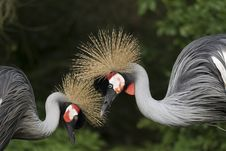Free Beak, Fauna, Crane Like Bird, Bird Stock Photography - 108316642