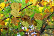 Free Leaf, Deciduous, Tree, Autumn Royalty Free Stock Images - 108316689