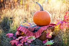 Free Leaf, Autumn, Pumpkin, Grass Stock Photos - 108316703
