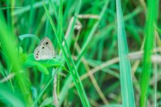 Free Butterfly, Insect, Moths And Butterflies, Grass Stock Image - 108316721