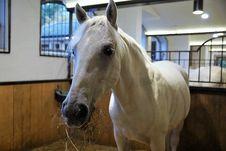 Free Horse, Bridle, Stallion, Horse Like Mammal Royalty Free Stock Images - 108316899