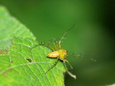 Free Spider Stock Photos - 10840523