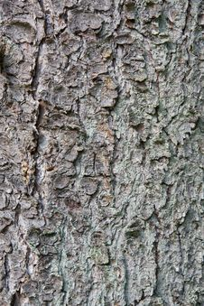 Old Pine Tree Trunk Texture Stock Photos