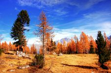 Free Nature, Sky, Tree, Wilderness Royalty Free Stock Photos - 108523388