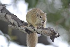 Free Mammal, Fauna, Rodent, Squirrel Stock Photo - 108523700