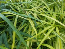 Free Plant, Grass, Grass Family, Herb Royalty Free Stock Image - 108523736