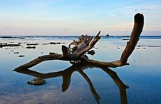 Free Sea, Water, Sky, Driftwood Royalty Free Stock Photography - 108523737