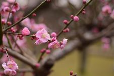 Free Blossom, Pink, Branch, Spring Royalty Free Stock Image - 108523766