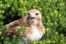 Free Bird, Beak, Fauna, Grass Royalty Free Stock Image - 108524116
