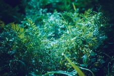 Dill Leaves In Dewdrops Retro Royalty Free Stock Photography