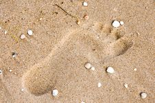 Free Footprint On Sand With Shells Royalty Free Stock Photography - 10870807