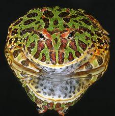 Free Frog Reflection Royalty Free Stock Photo - 10873635